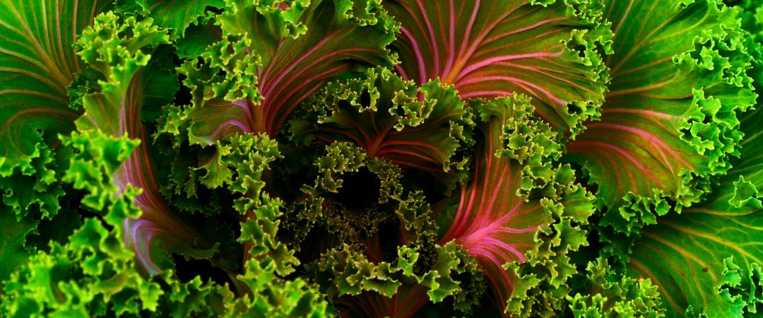 Red & Green Kale