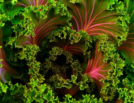 Red Green Kale