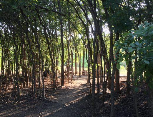 dirt-walking-path